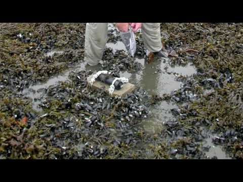 Gulf Oil Spill Effects On Wildlife