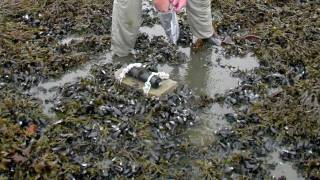 Gulf Oil Spill Effects On Wildlife
