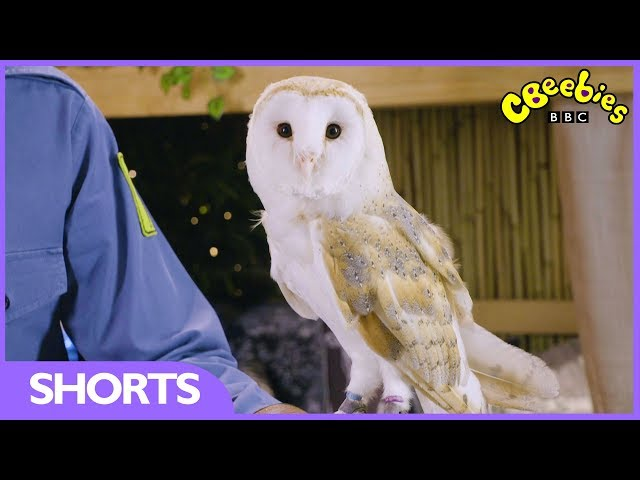 CBeebies | Andy's Secret Hideout | Owls