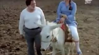 Ponyboy riding