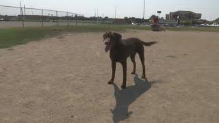Dog Ordinance
