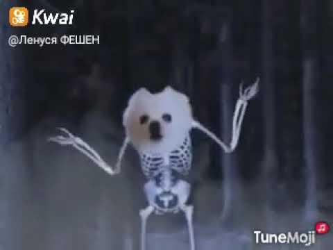 Собака скелет танцует