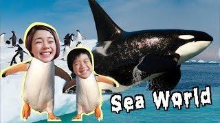 [美國Vlog] 用手摸鯊魚!海獅餵食秀、超大殺人鯨耍特技! SeaWorld Tour