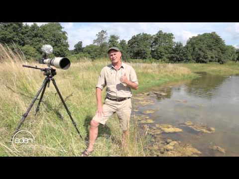 Filming Kingfishers And Dragonflies Over Water | Eden Shorts