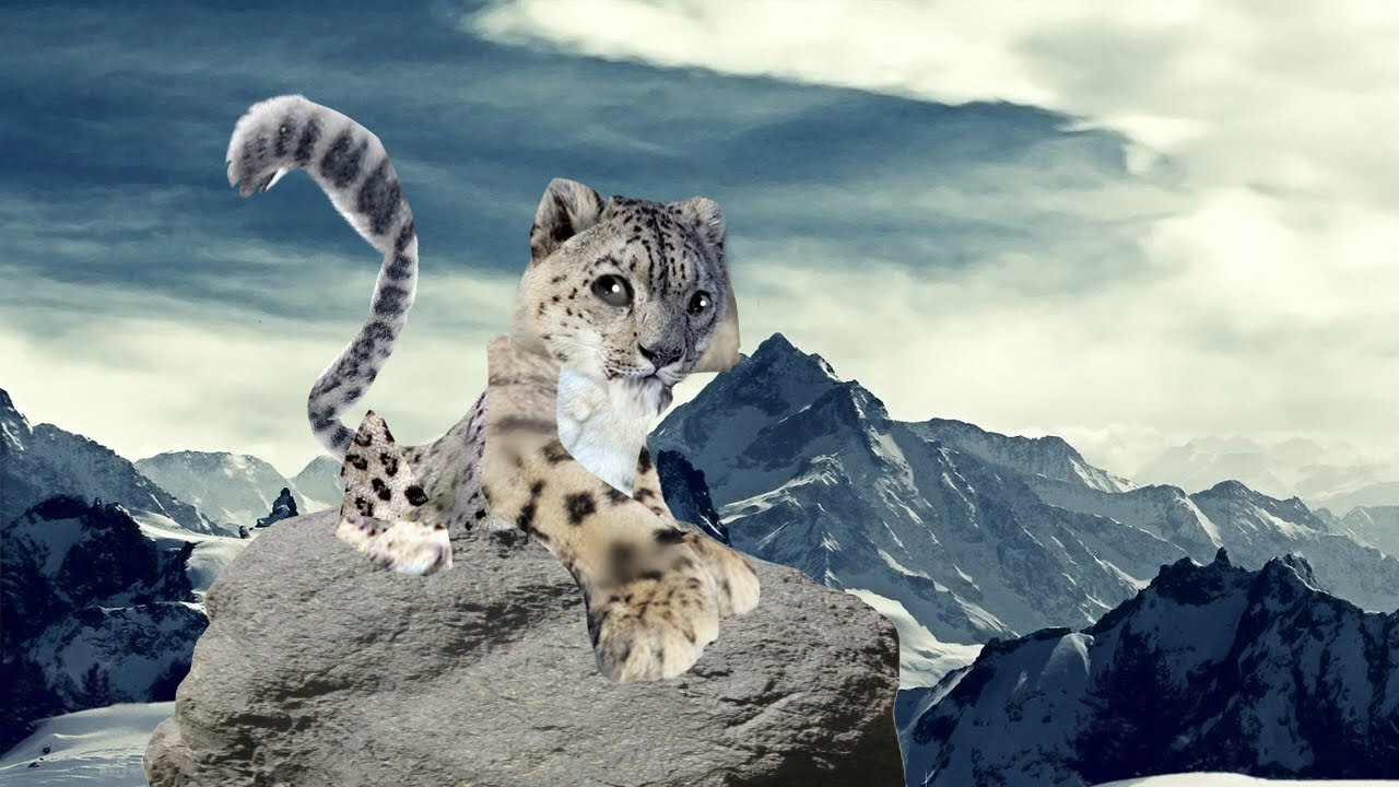 Image of: Png Youtube Animal Jam Snow Leopard Irl o Youtube