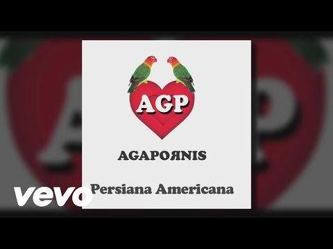 Agapornis - Persiana Americana