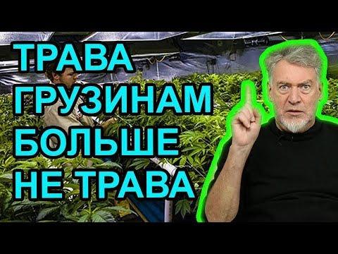Артемий троицкий марихуана сколько дней из организма выходит марихуана