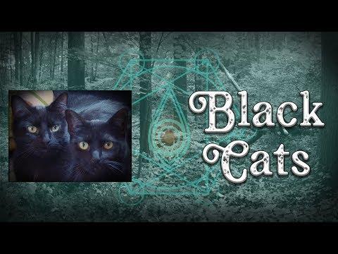Black Cats | Halloween Special