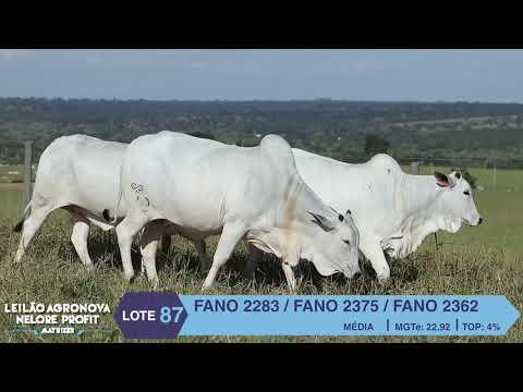 LOTE 87 FANO 2283 X 2375 X 2362