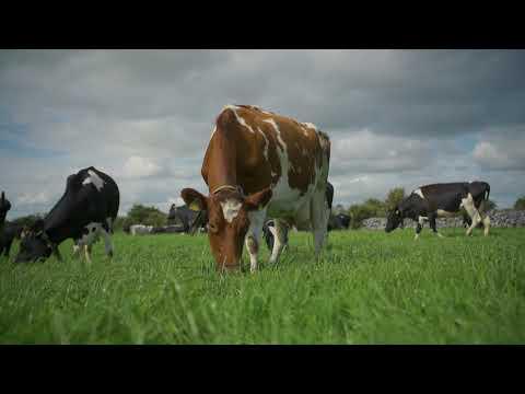 Henry Walsh- 2015 Host IGA DST, Soil Fertility and Reseeding