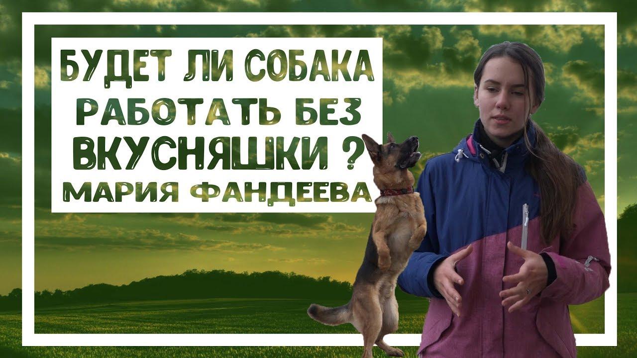 Будет ли собака работать без лакомства? Мария Фандеева, дрессировка собак в Санкт-Петербурге