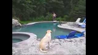 "Dog Saves ""Drowning"" People V2"