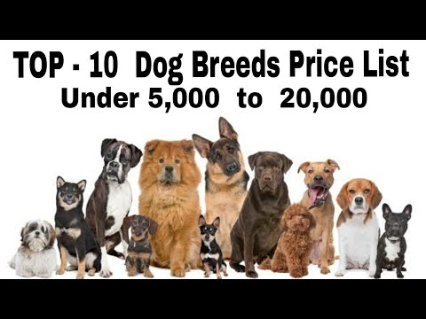 TOP - 10 Dog Breeds Price List Under 5,000  to  20,000 / Do you know / by Aryan Dog Club Aryandogclu