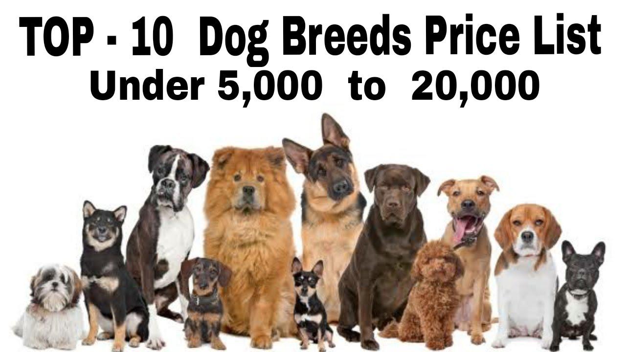 Top 10 Dog Breeds Price List Under 5 000 To 20 000 Do You Know By Aryan Dog Club Aryandogclu Youtube
