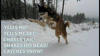 Dog Goes Crazy in the Snow! RoadTrip to Scotland | FUN