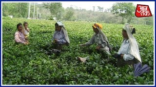 Demonetisation: Tea Plantation Workers To Face A Major Crisis In Darjeeling