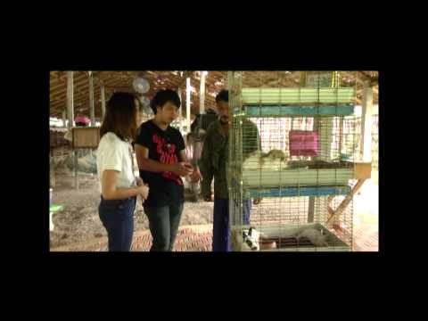 ฟาร์มกระต่าย1-อัพเดตประเทศไทย