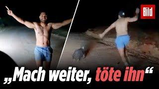Polizist erschlägt Wombat mit Stein! Verstörendes Video aus Australien aufgetaucht