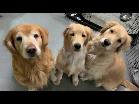 仔犬のマテ動画を撮っていたら母犬がわりこみに!