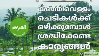കഞ്ഞിവെള്ളം ചെടികള്ക്ക് ഒഴിക്കുമ്പോള് ശ്രദ്ധിക്കേണ്ട കാര്യങ്ങള് - Use rice water for plants