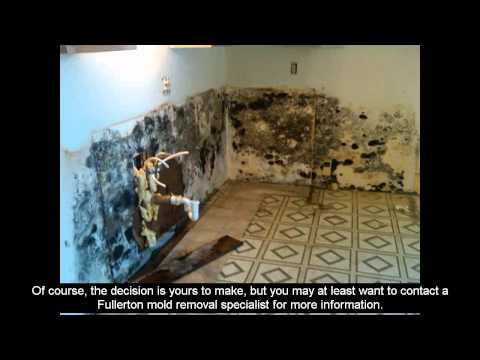 Mold Remediation - Modern Marvels On Mold Remediation - The Best Solution For Mold Problems