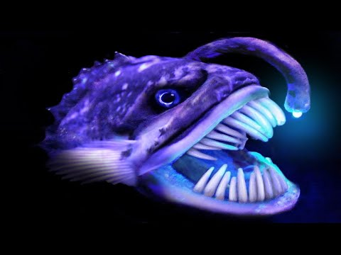 Most Bizarre Deep-Sea Creatures Recently Discovered