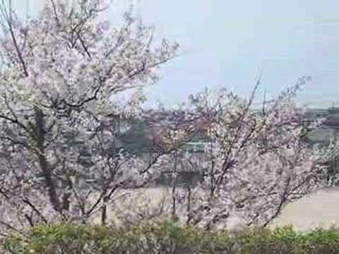 Spring around the Shimane area
