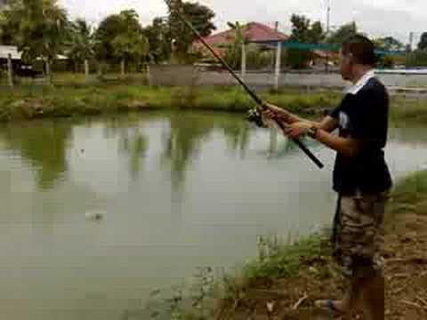 เย่อกับปลา