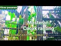 Cucak Ranting Gacor Sumatra  Mp3 - Mp4 Download