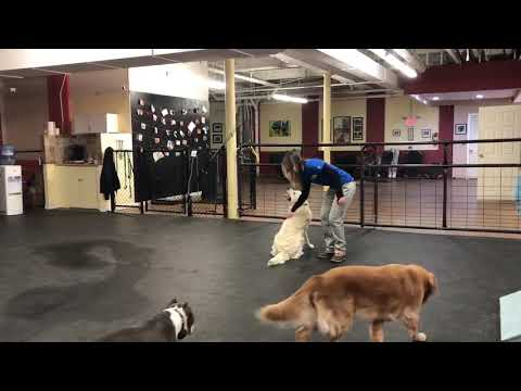 Off Leash Recall Dog Training | Solidk K9 Training