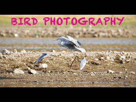 Bird Photography Tutorial VLOG:1 thumbnail