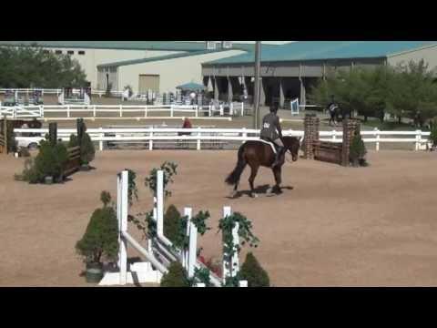 """Cuba"", Virginia Horse Park. Imported hunter for sale."