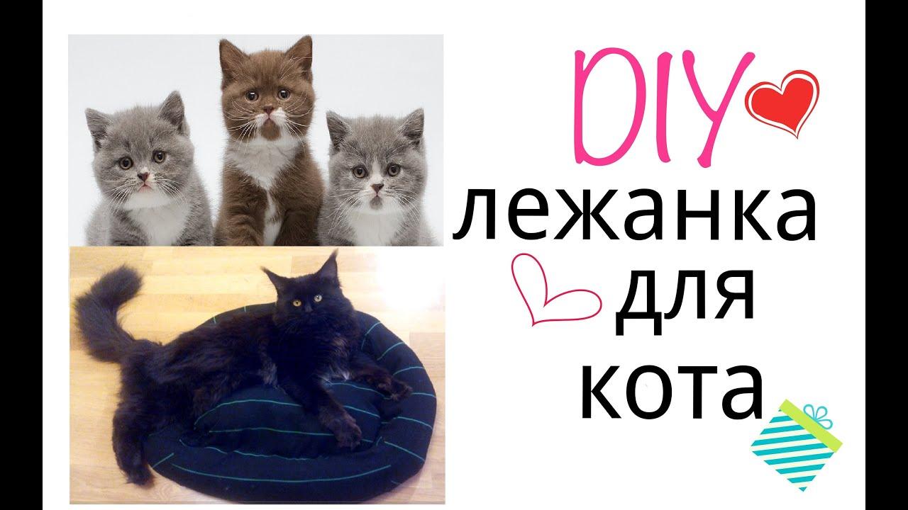 10 июн 2016. Великая ванга говорила, кошки во сне несут негативную. Если во сне вас окружает множество котов, значит, наяву у вас много.