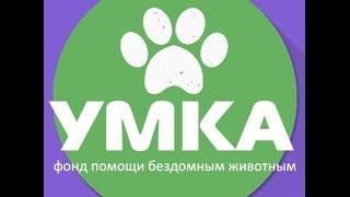 РЕН ТВ Закон о безнадзорных животных