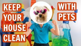 How To Keep Your House Clean With Pets Youtube