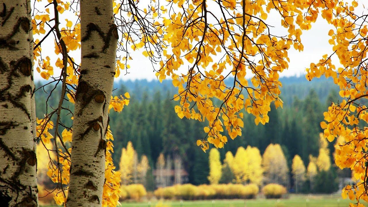 4k Fall Wallpaper Fall Foliage At Black Butte Ranch Oregon 4k Uhd Youtube