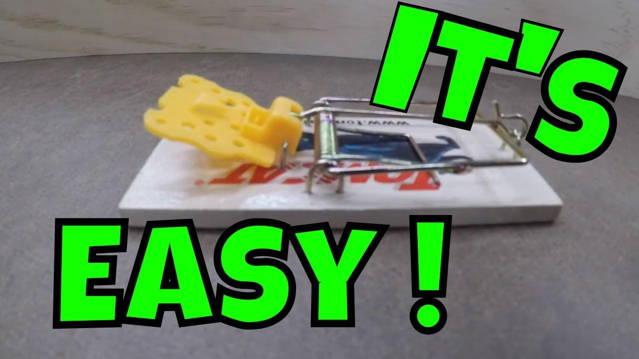 how to set a rat trap tomcat