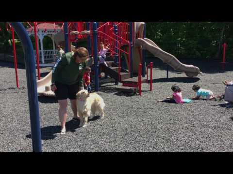 2-Year Old Golden Retriever, Hope!  Golden Retriever Dog Trainers in Virginia, DC, and MD