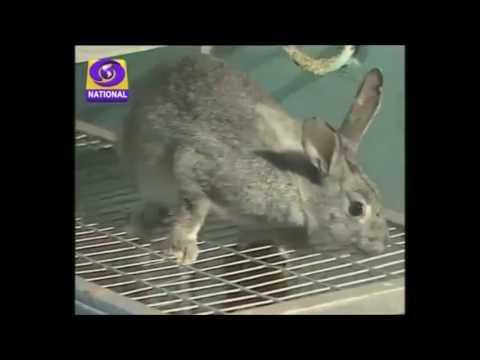 Best || Rabbit Farming in India || By Kishan Rabbit Farms ||  9571481888  ||  9636106888