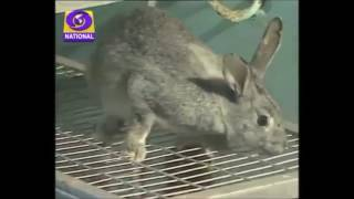 Best || Rabbit Farming in India || By Kishan Rabbit Farms ||  9571481888  ||  9636106888