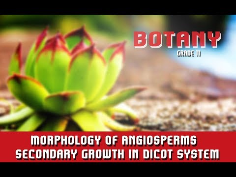 Morphology Of Angiosperms | The Anatomy | Secondary Growth In Dicot System | Overview | Section 15