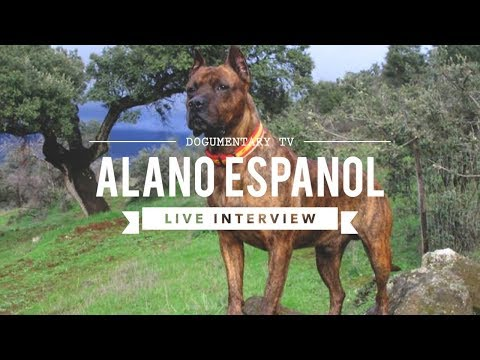 DOGUMENTARY TV INTERVIEW: ALANO ESPANOL