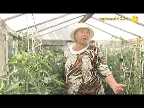 Оценка томатов огородницей: Дворцовый, Грибное лукошко, Гулливер