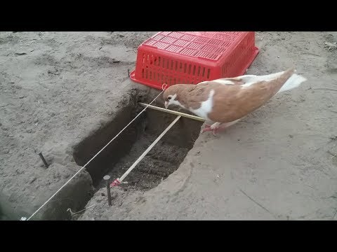 DIY Amazing Bird Catching - Bird Trap Very Easy from Basket and Bottle