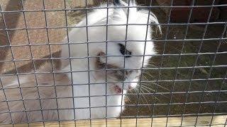 Ragdoll cat get hugged by fluffy rabbit.