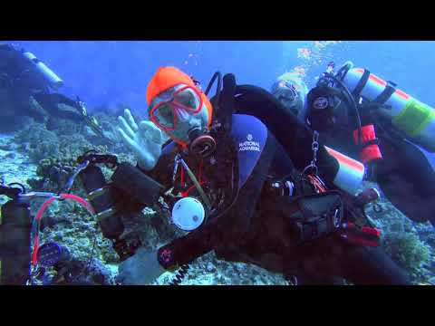 Paul-Ranky-Tubbataha-04-Dives-JessieBeazleyReef-RangersVisit-4Kvideo-Master-Edit-HD