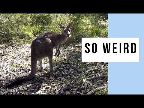 Australia Has Some Weird Animals!
