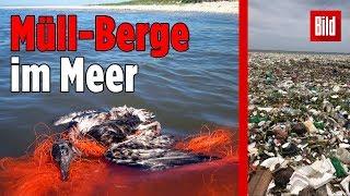 So unglaublich schlecht steht es um unsere Meere!