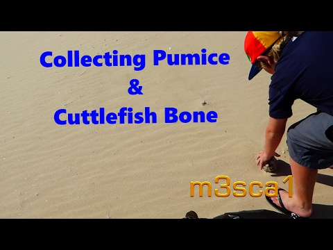 Collecting Pumice & Cuttlefish Bone