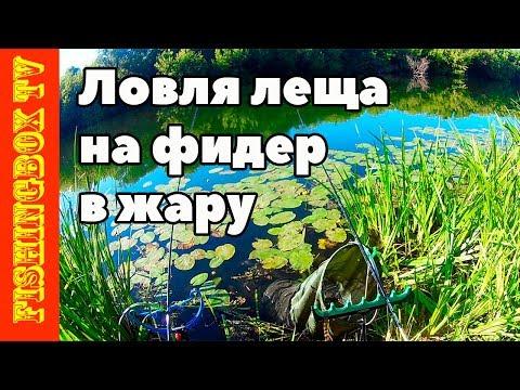Видео лещ летом